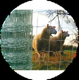 grillage à moutons