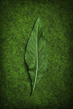 Grünes Blatt auf Grün