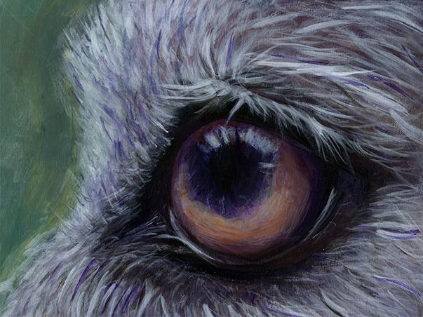 Eye of the Wolf Shaman