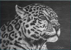 The Gazing Leopard