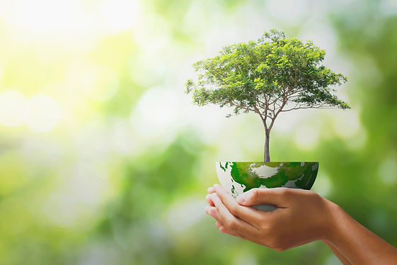 hand holding tree with half globe an d sunlight. concept eco earth day.jpg