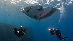 Shooting Mantas at San Benedicto for BBCs SHARK
