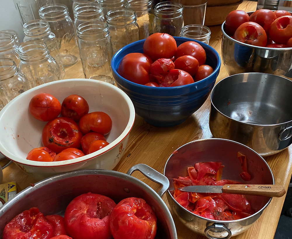 Whole tomatoes ready to be canned
