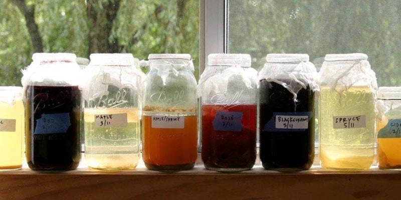 Jars of homemade vinegar