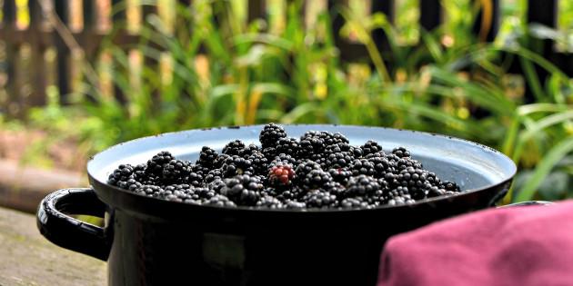 A pot of fresh blackberries