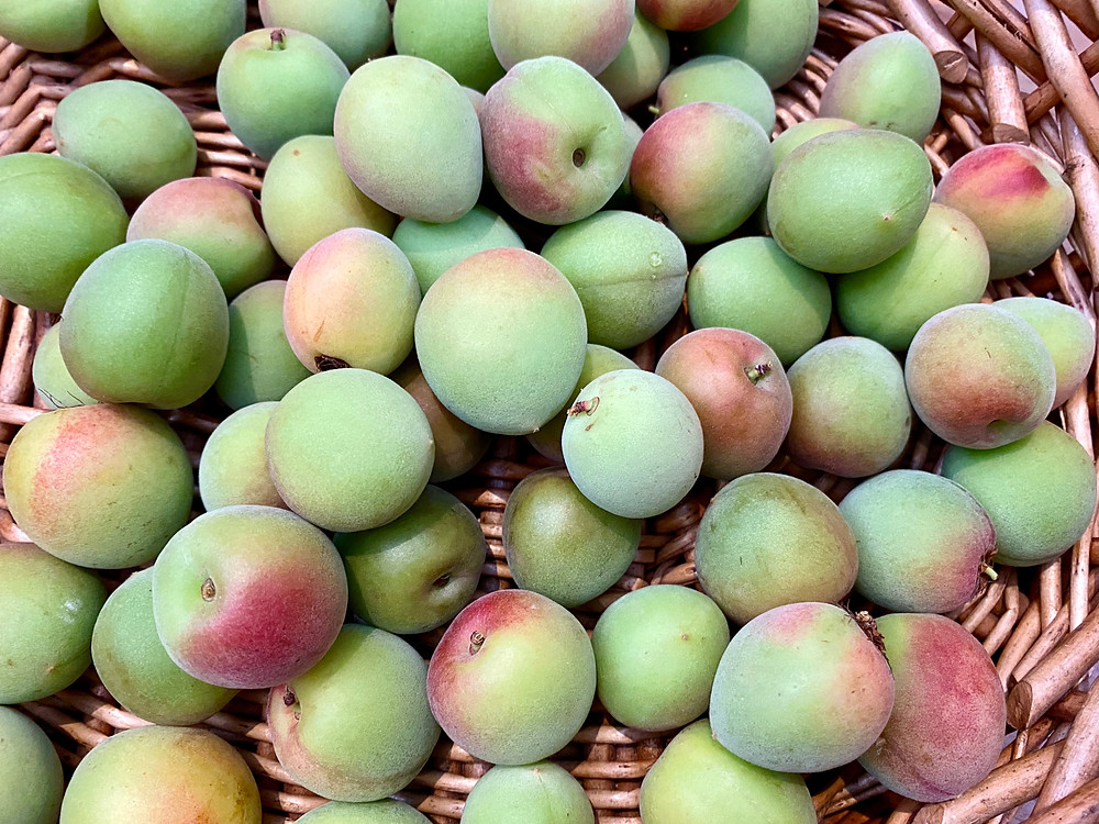basket of rip ume plums which are half green, and half yellow/pink!