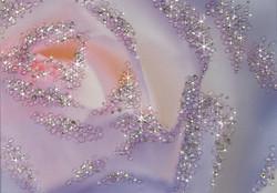 憂いの薔薇