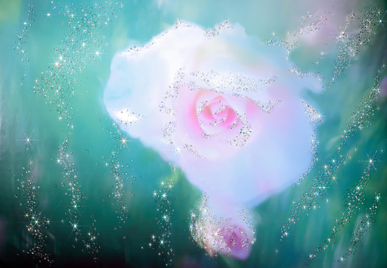 ジュヴェルニーの薔薇 Photo:堤 一夫 氏