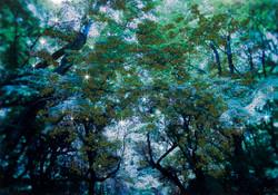 神様の棲む森