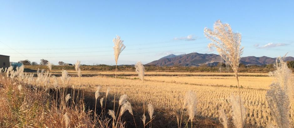 ここだけ!「筑波山を〇〇と望む」栄地区おすすめビュースポット3選