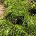 GRASS%2C%20wet%20area_edited.jpg