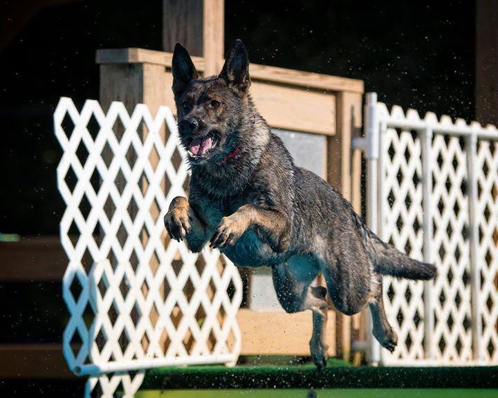 Pool Rental 1 hour (5 dogs)