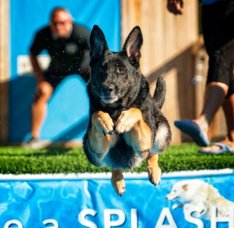 Pool Rental 1 hour (7 dogs)