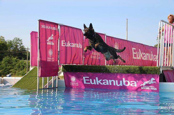 Pool Rental 1 hour (4 dogs)