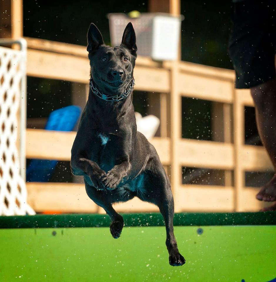 Pool Rental 1 hour (3 dogs )