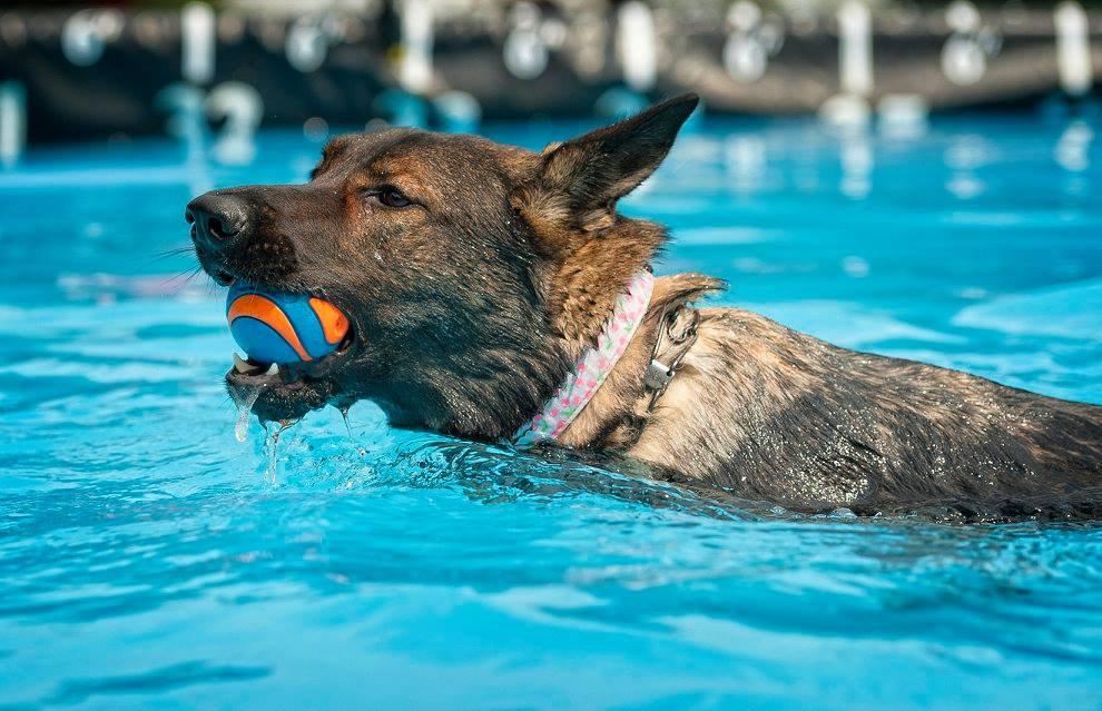 Pool Rental 1 hour (2 dogs)