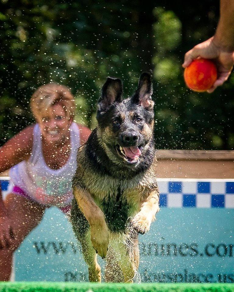 Pool Rental 1 hour (6 dogs)