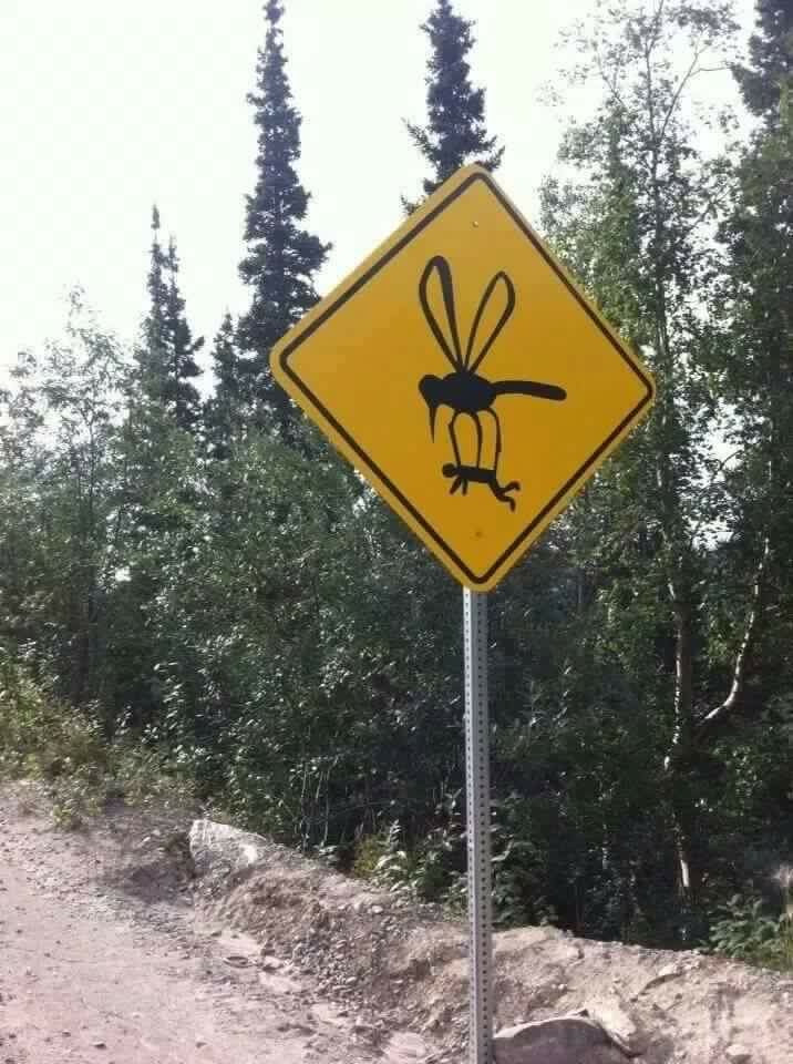 Remember your bug spray!