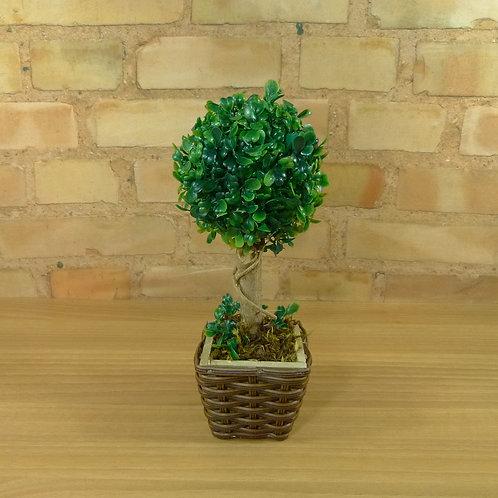 Árvore - Mini - Buxinho - Pequena