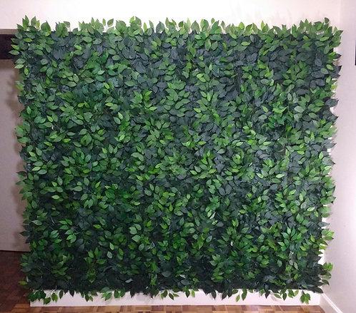 Muro Inglês - Folhas de Ficus - 2,10m x 2,30m - Com Suporte