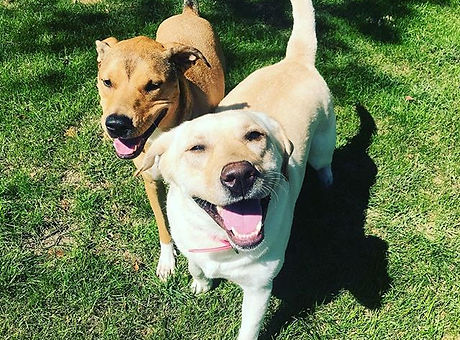 These two were instant buds! Thanks for a great week Brookie Cookie! #pawpackmn #dogboardi