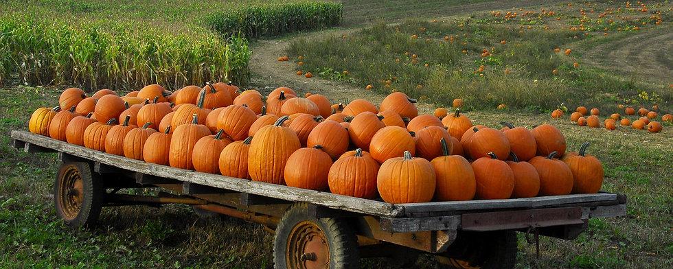 67-676275_pumpkin-patch-wallpaper-hd.jpg