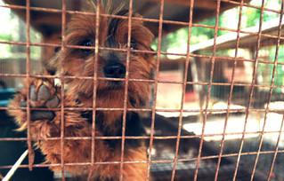 São Francisco proíbe a venda de animais não resgatados em Pet Shops