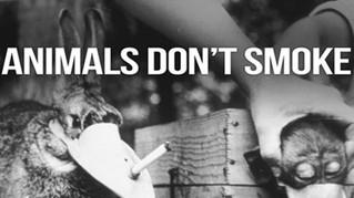 A Indústria do Tabaco e a Tortura de Animais