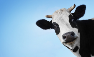 Universidade de Harvard retira leite e lacticínios da pirâmide alimentar