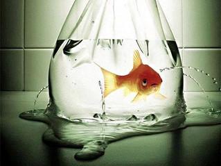 9 razões para os peixes serem animais de estimação tristes