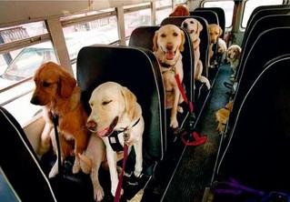 Câmara de SP aprova lei que permite transportar cães e gatos em ônibus