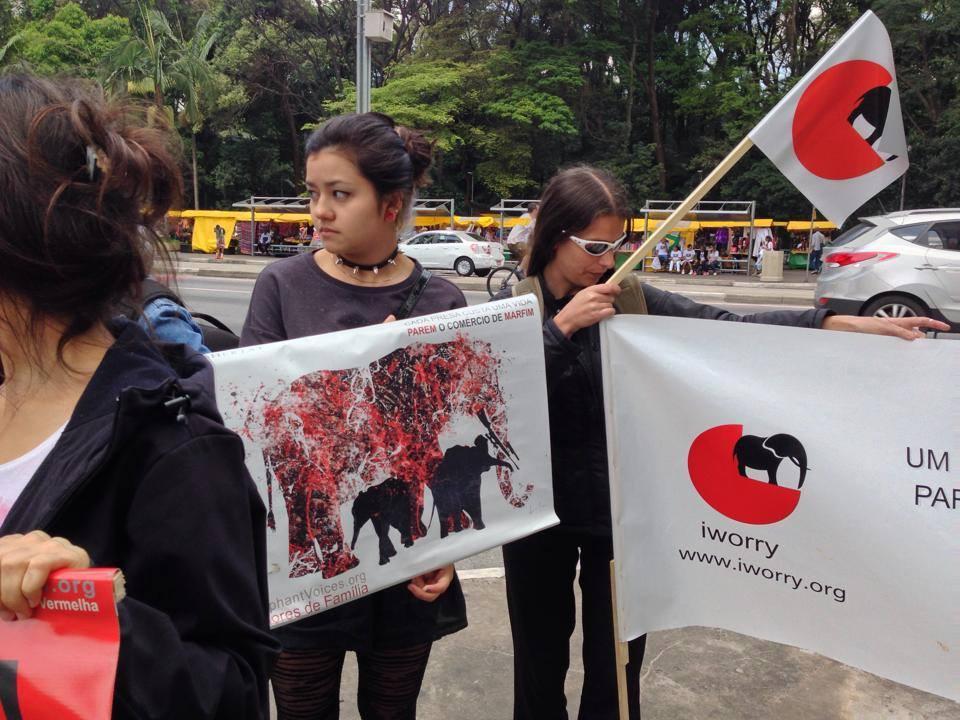 elephant voices brasil