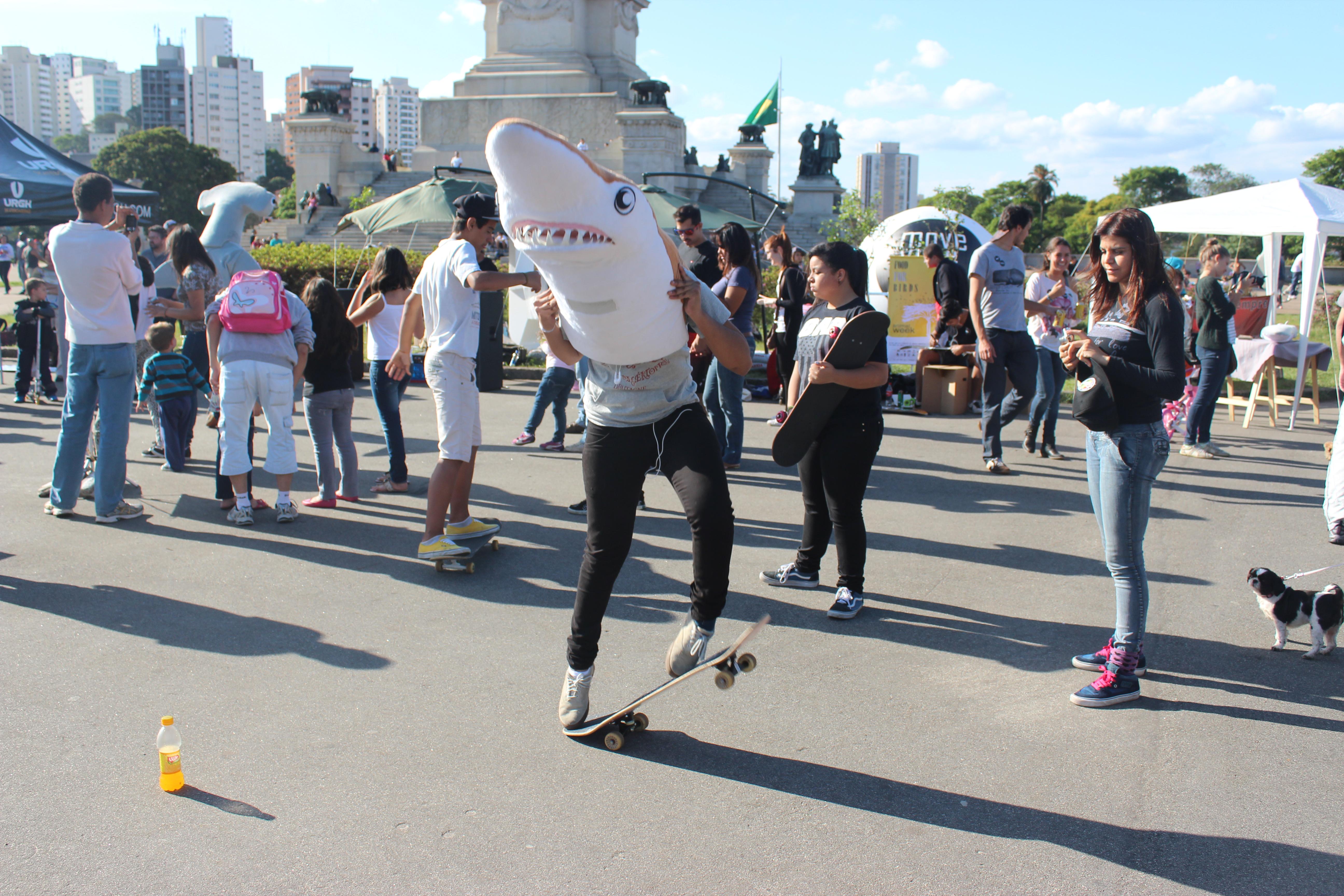 skate + divers for sharks