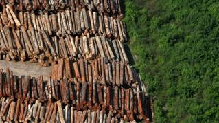 Não Vai Sobrar Amazônia