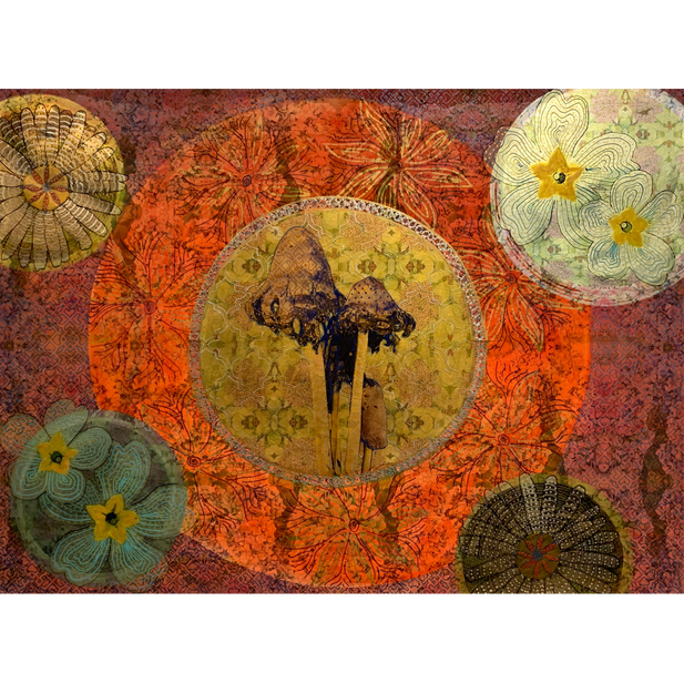 Fungis II, 2019