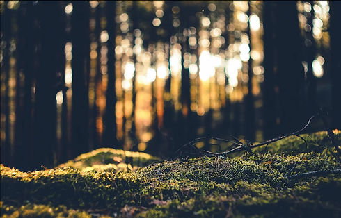 new forest image wix.jpg