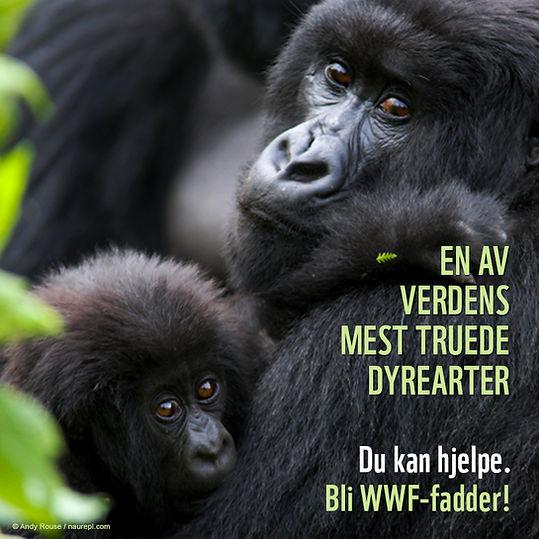 gorillaskisser_enavverdensFBpost.jpg