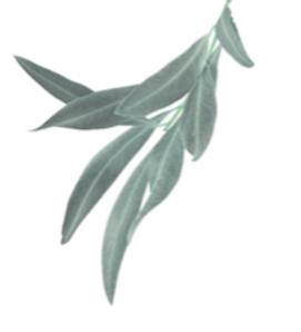 the healing tree leaf design