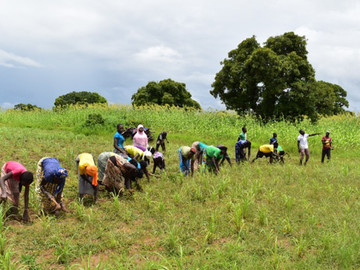 The Road Towards Food Sovereignty in Africa