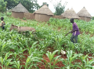 Sustainability, Continuous improvement, and climate change in Burkina Faso