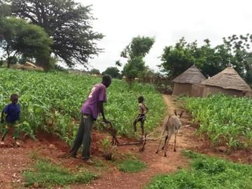 Farming in Sub-Saharan Africa