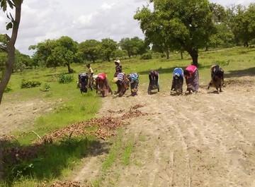 Women farmers in west Africa