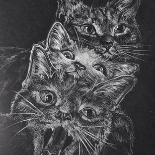 un, deux, trois, cat! / Black and white realism study of cats with pencil crayon.