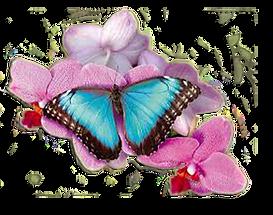 papillon_01.png