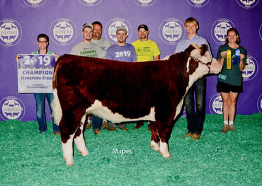 Jared Machiela, Grand Champion Hereford Michigan Livestock Expo