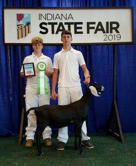 Joshua Thompson, Champion Dairy Goat. In