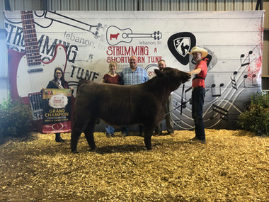 Brandon Barr Grand Champion Bred and Owned, Shorthorn Jr. Nationals, TN