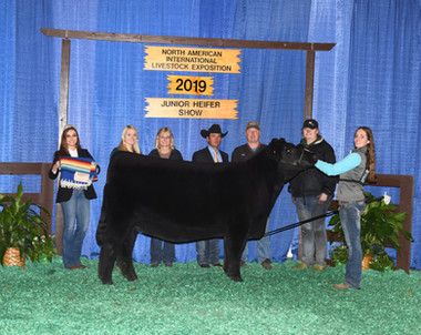 Kylie Pickard Reserve Champion Bred & Ow