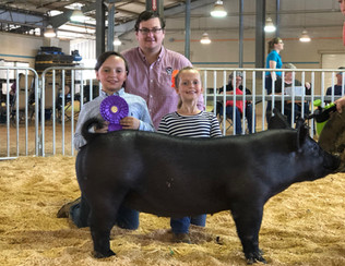 Chat Bolt Grand Champion Anderson County