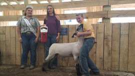 Isaac Miller Grand Champion Bland County